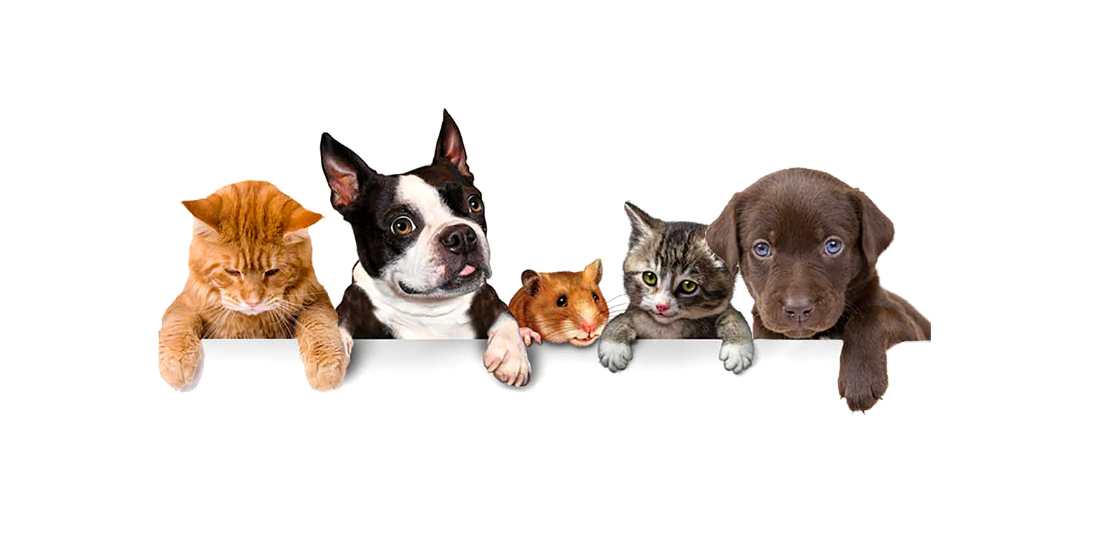 Pet Advisor